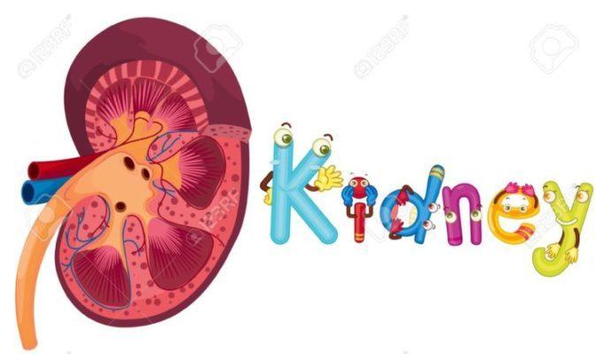蛋白尿を調べる検査について 〜ここで医学的説明をします。〜