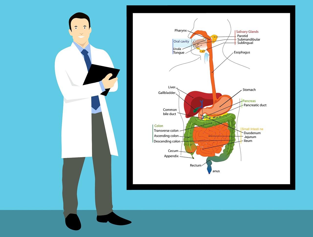 多発性嚢胞腎(ADPKD)とは